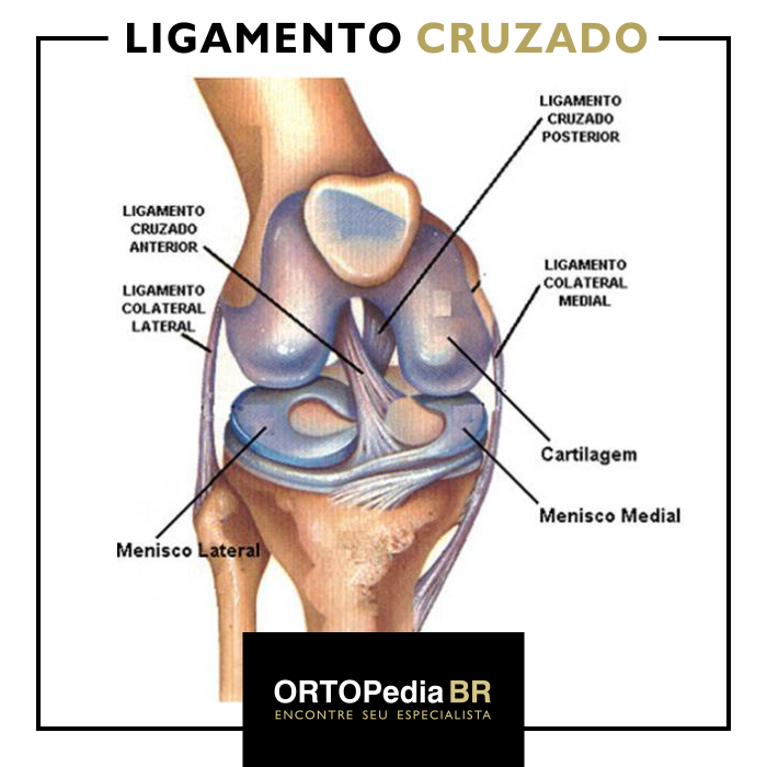 LIGAMENTO CRUZADO ANTERIOR PDF DOWNLOAD
